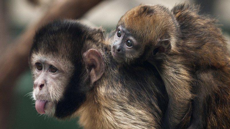 Allemagne: une Américaine va léguer 22 millions de dollars au zoo de Cologne