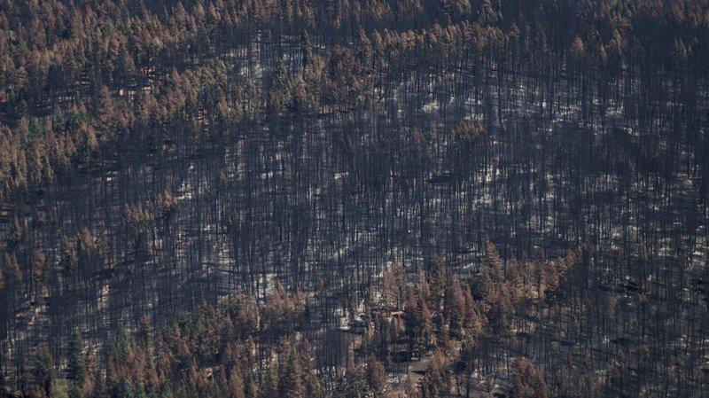 Depuis avril, plus de 1,2 million d'hectares (12'000 km2) de forêt ont été détruits en Colombie-Britannique.
