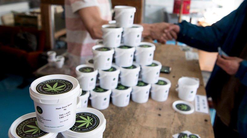 Les producteurs de cannabis légal se multiplient en Suisse