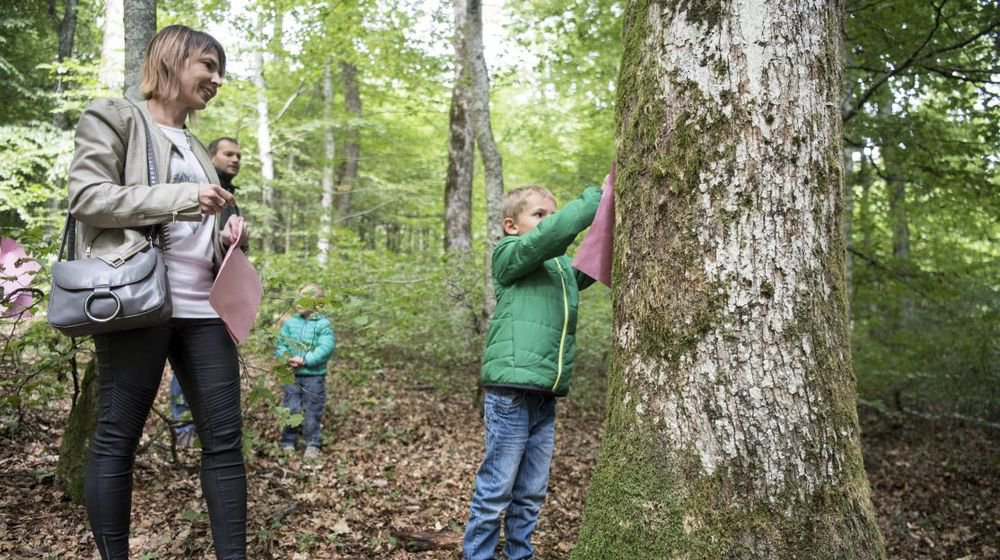 L'une des activités de la Journée suisse du bois, au-dessus de Vaumarcus.