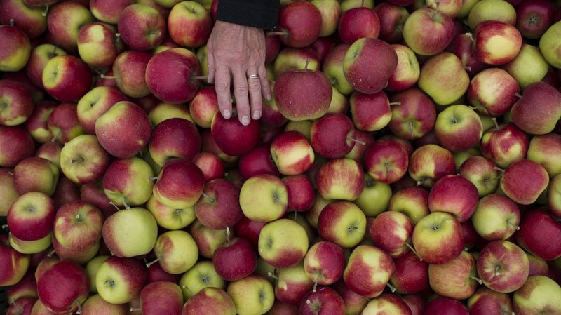 La pomme, cette star indétrônable en Suisse