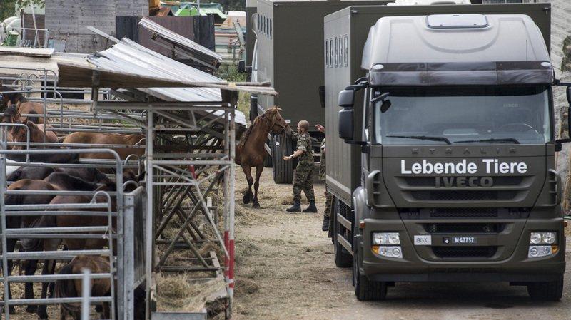 Maltraitance animale: la police empêche un transport dechevauxprès de Davos (GR)