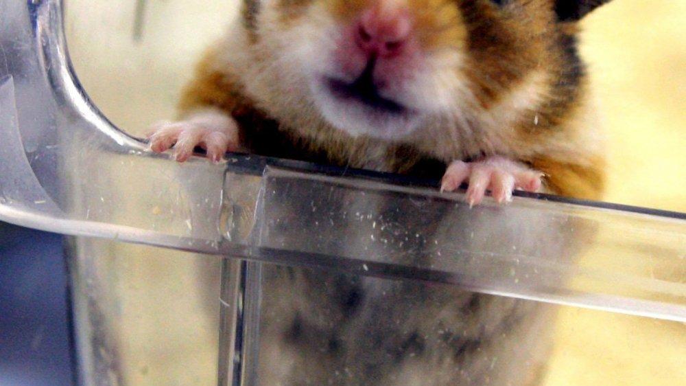 Les initiants appellent à un «changement de paradigme» concernant l'expérimentation animale.