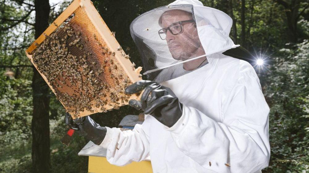 Alexandre Aebi dans ses ruches à Neuchâtel.