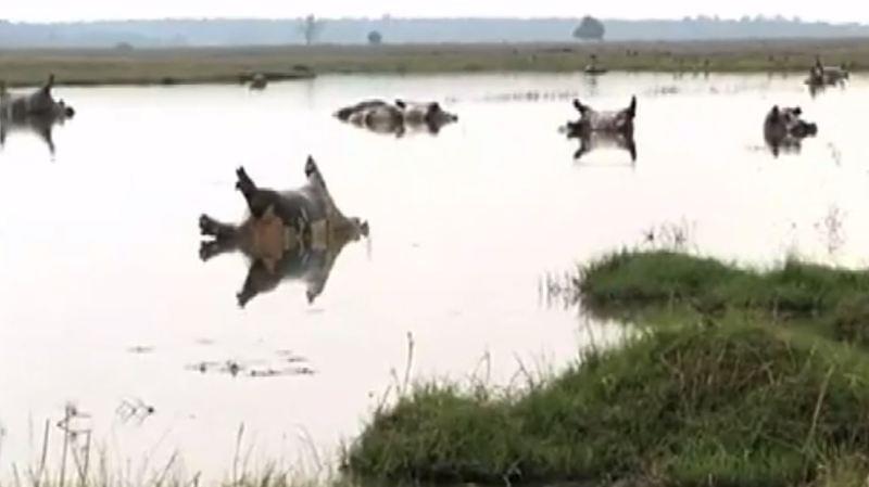 Sur des photos publiées dans la presse locale, des cadavres d'hippopotames gisent sur le dos ou la tête au-dessus de l'eau dans le parc de Bwabwata.
