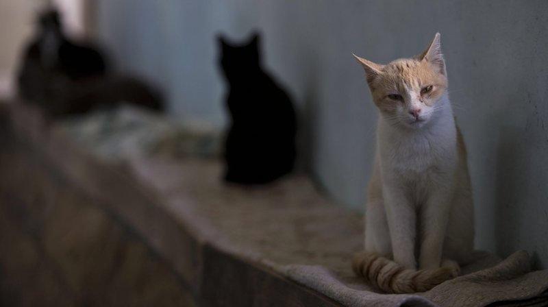 Australie: les chats tuent un million d'oiseaux par jour