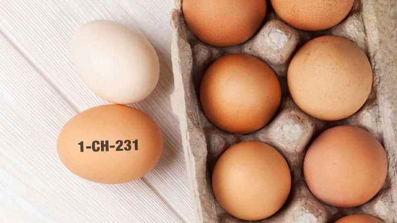 Alimentation: seuls 800 oeufs de la Migros seraient contaminés par des salmonelles