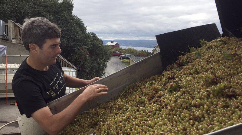 Viticulture: la production mondiale de vin n'a jamais été aussi basse depuis plus de 50 ans