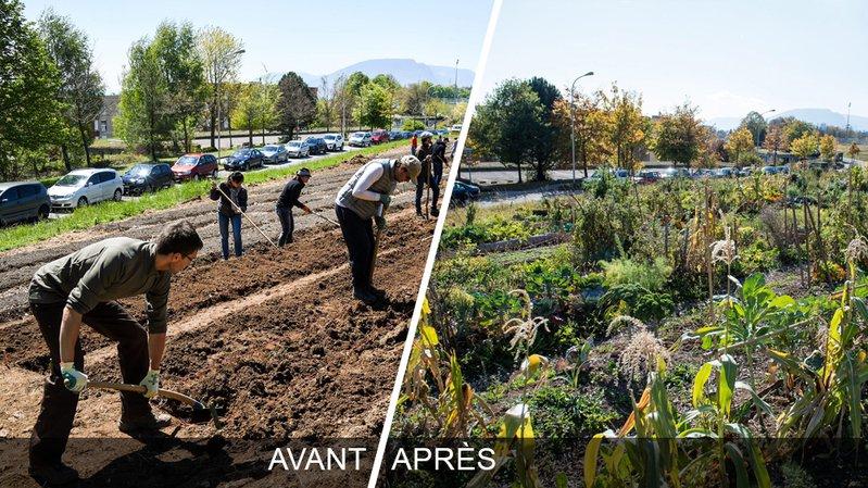 Nouveaux potagers urbains à Pierre-à-Bot: une première saison de toute beauté