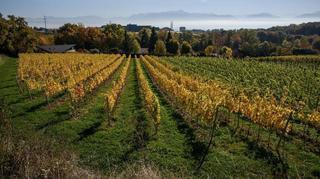Grand Prix du vin suisse: 8 caves neuchâteloises nominées