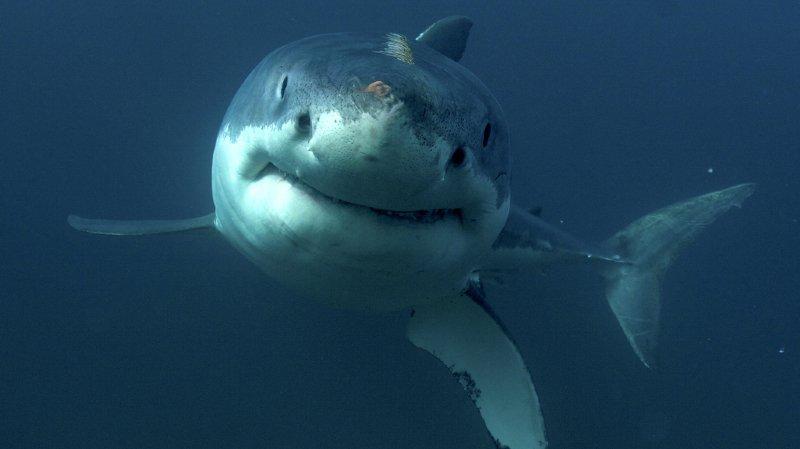 Cuba: un requin leur fonce dessus pendant un bain nocturne et fait un mort