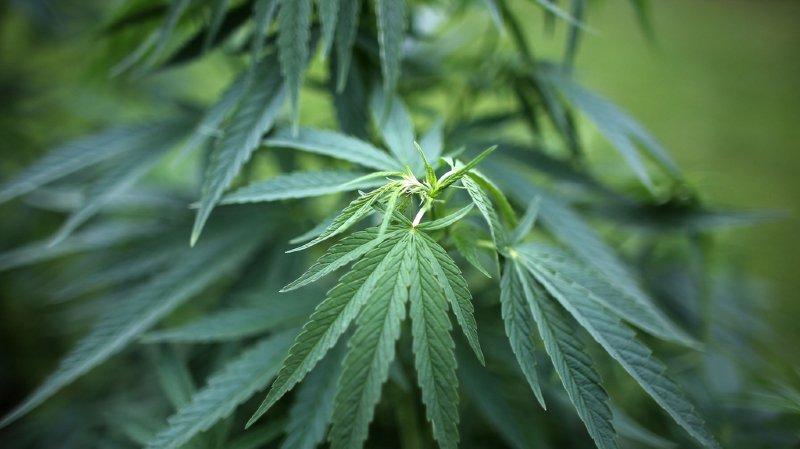 Santé: plusieurs villes alémaniques demandent des études sur la légalisation du cannabis