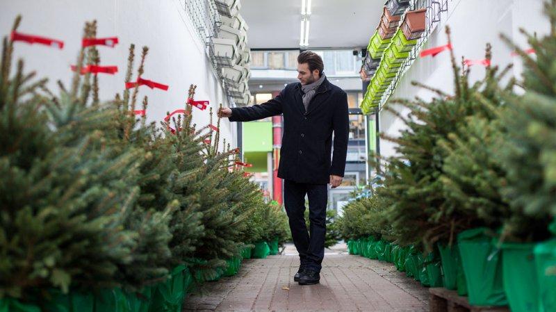 Suisse: 500'000 sapins de Noël suisses sur le marché malgré le gel
