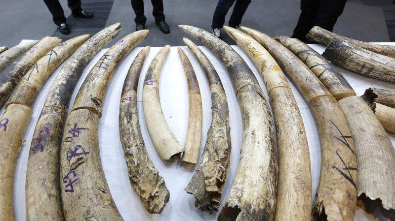Environnement: la Suisse prévoit un million de francs pour la préservation des espèces