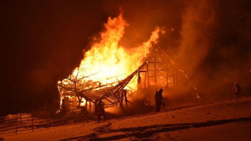Amden (SG): dix chèvres, quatre veaux, trois lapins nains, dix-sept poules et trois coqs périssent dans l'incendie d'une grange