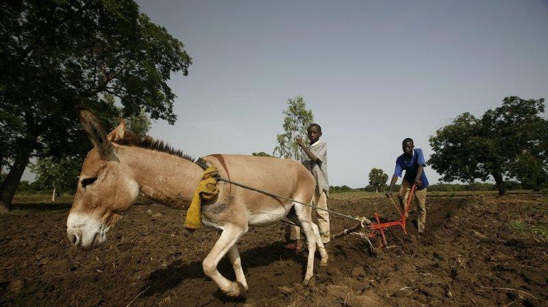 L'association Jethro propose des formations à l'agro-écologie, des formations continues ainsi que du soutien au développement agricole.