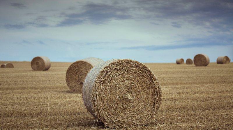 L'agriculture bénéficiera de nouvelles aides financières.