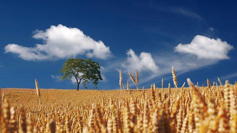 Quelle agriculture pour quelle alimentation ?