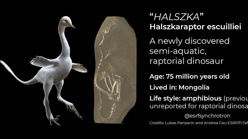 """Entre le vélociraptor, le cygne, et le pingouin: un dinosaure """"très bizarre"""" a été découvert"""