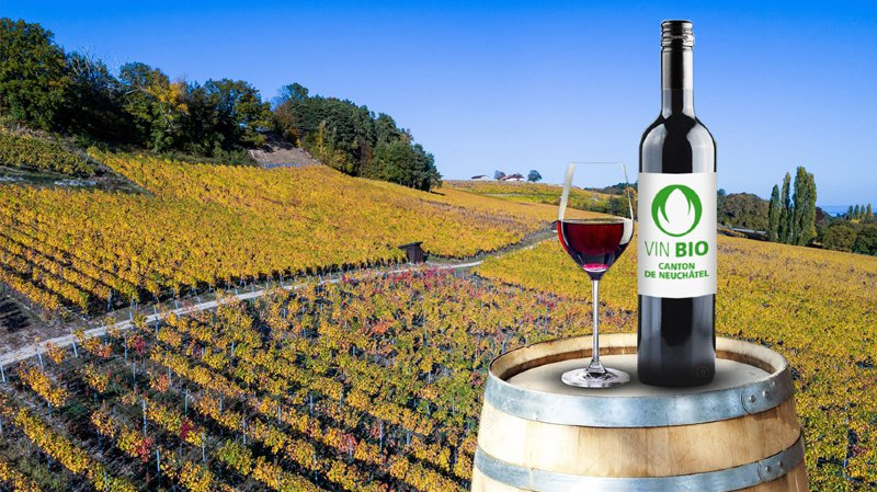 Pourquoi le canton de Neuchâtel est le champion des vins bio