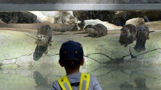 Vers un zoo-musée plus modeste?