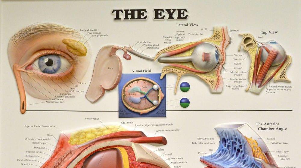 La chirurgie de l'oeil pourra se déployer au centre-ville de Neuchâtel.