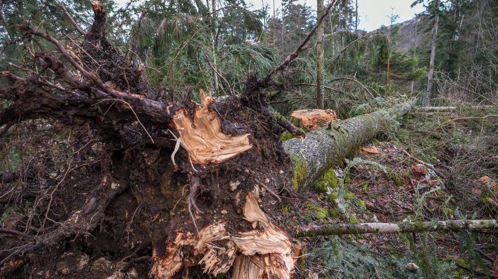 Dans les Franches-Montagnes, au Noirmont, de nombreuses zones ont été impactées par la tempête Eleanor, il y a tout juste une semaine.