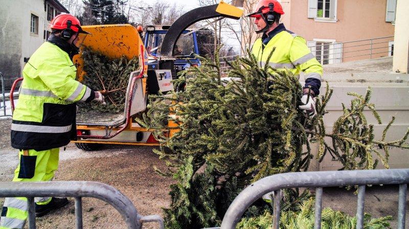 Le déchiquetage des sapins de Noël, l'an dernier à Marin.