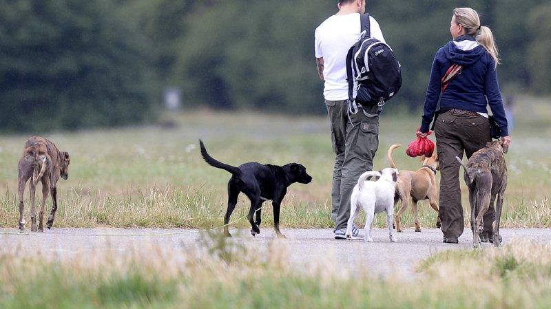 Les cours canins n'ont pas diminué le nombre de cas de morsures, ont argumenté les groupes PDC, PLR et UDC. (illustration)
