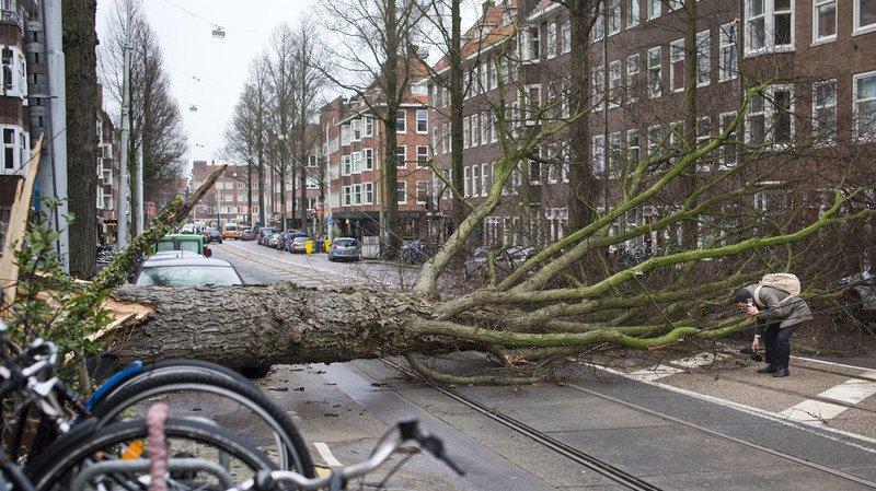 Aux Pays-Bas, deux personnes ont été tuées par des chutes d'arbres.