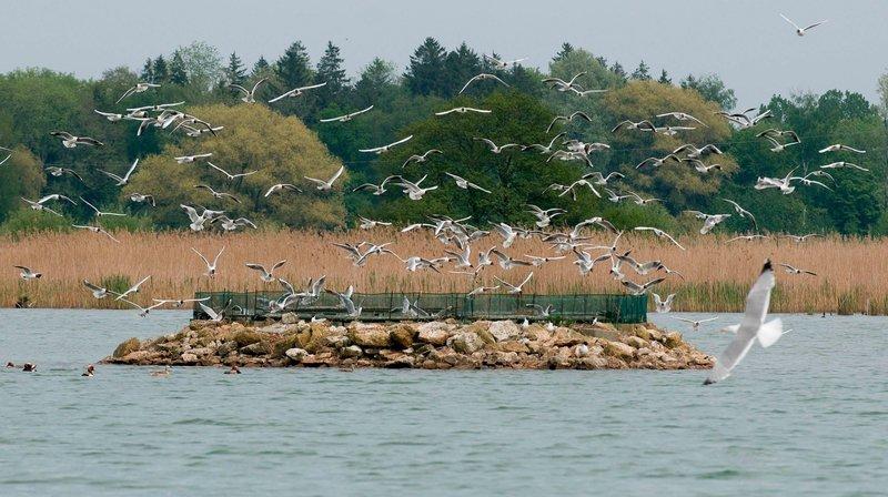 Certains oiseaux migrateurs font halte sur le site du Fanel.