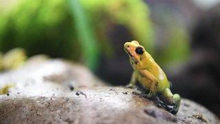 Plus de 300 animaux mystérieux à découvrir à Cernier