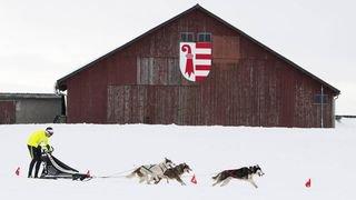 Saignelégier: les courses de chiens de traîneaux et la fête du chien nordique font plouf