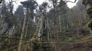Dégâts limités dans les forêts jurassiennes après le passage d'Eleanor