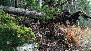 Forêt Brenets 2