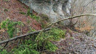 Forêt Brenets 3