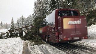 Valais central: un arbre s'écrase sur un car transportant des élèves aux Collons 1800, pas de blessés