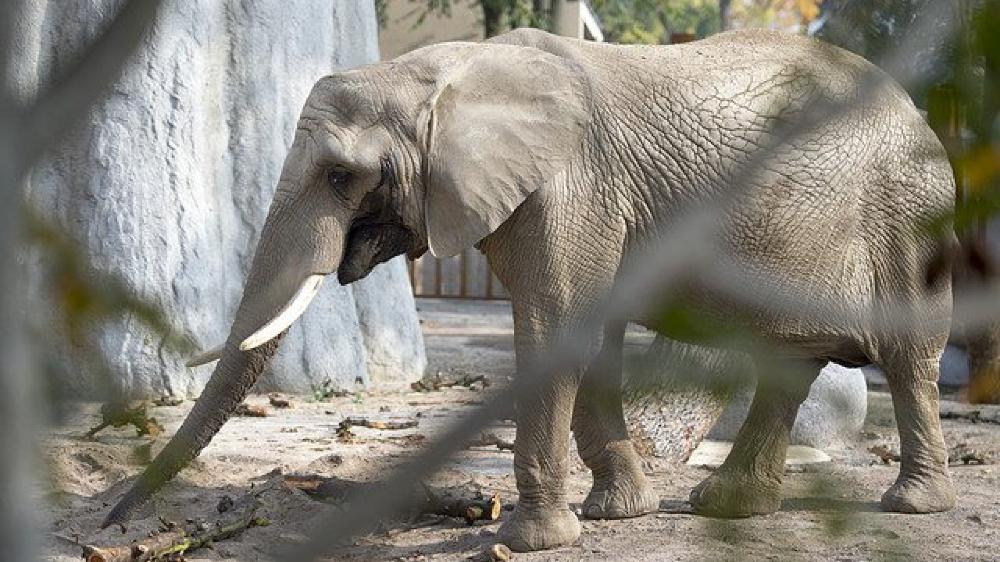 Les zoos prennent des mesures contre le froid