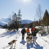 Randonnées hivernales avec les Saint-Bernard