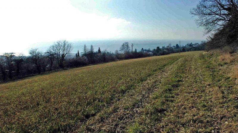 Le terrain sur lequel pourrait être construit le nouveau quartier des Chauderons.