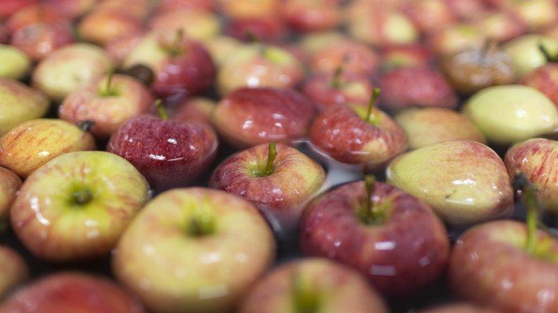 La Confédération autorise l'importation de 8000 tonnes de pommes