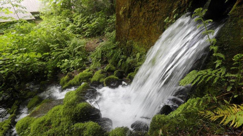 Etats-Unis: les habitants d'Osceola en ont marre que Nestlé pompe leur eau... pour 200 dollars par an