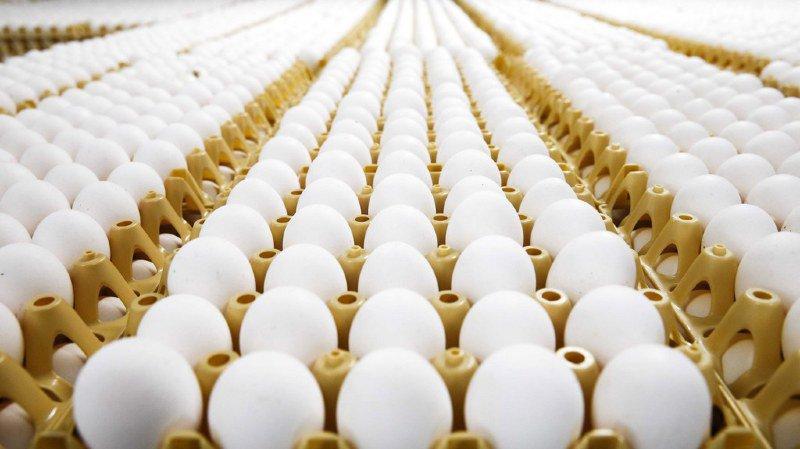 JO 2018: un problème de traduction... et les Norvégiens se retrouvent avec 15'000 œufs