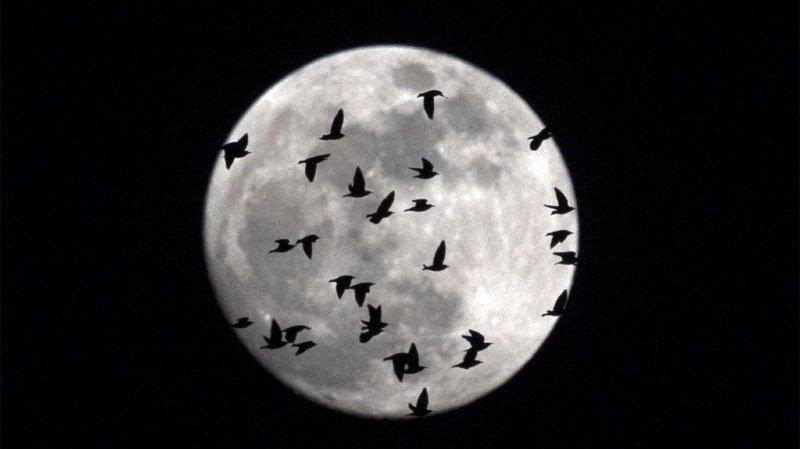 Astronomie: triple phénomène attendu ce mercredi avec une super Lune, une Lune bleue et une éclipse