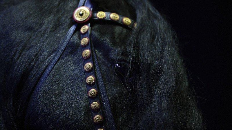 Les trois autres chevaux ont été rapatriés sur une aire de restoroute et la voie en direction de Berne a dû être fermée durant deux heures suite à l'accident.
