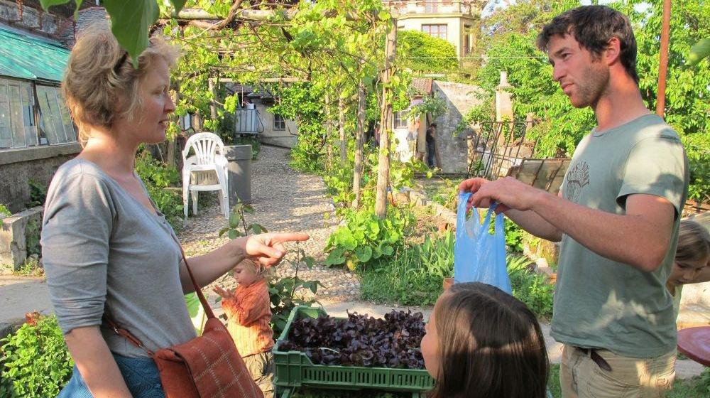 Quelque 180 familles sont abonnées aux paniers de légumes cultivés par l'association Rage de vert à Thielle.