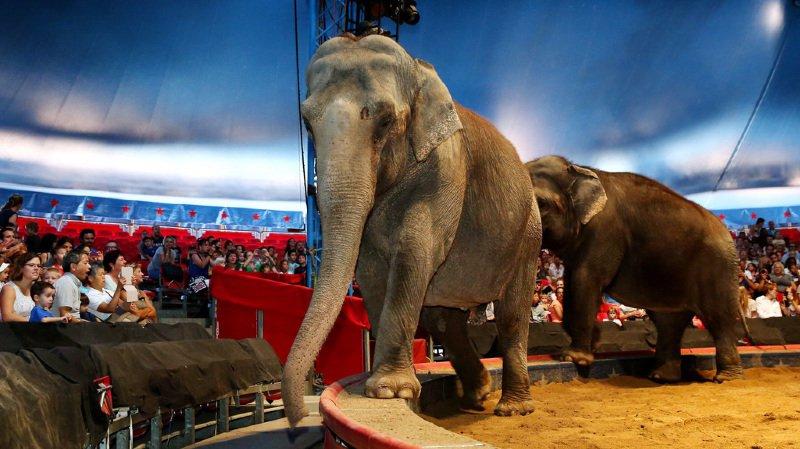 Un éléphant de cirque mort dans un accident — Espagne