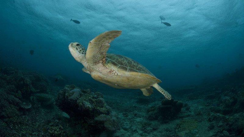 Dérèglement climatique: jusqu'à 50% des espèces pourraient être menacées