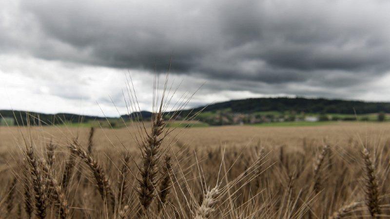 Suisse: selon l'USP, l'agriculture ne peut bientôt plus accomplir son mandat