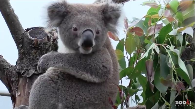Zoo de Zurich: des animaux exotiques ont découvert leur nouvel enclos australien